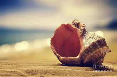 Outdoor Still Life Pyrography - Seashell In The Sand  by Jelena Jovanovic
