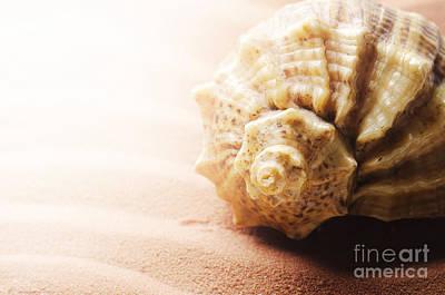 Outdoor Still Life Pyrography - Seashell by Jelena Jovanovic