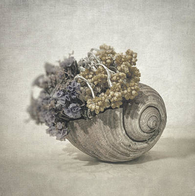 Photograph - Seashell No.2 by Taylan Apukovska