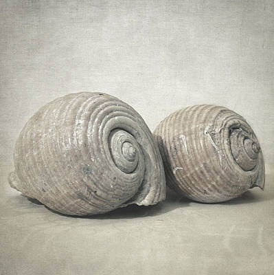 Photograph - Seashell No.3 by Taylan Apukovska