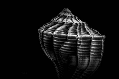 Seashell On Black Art Print by Bob Orsillo