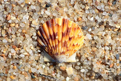 Agate Beach Photograph - Seashell On Sandy Beach by Carol Groenen