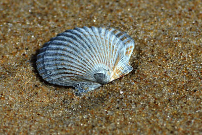 Photograph - Seashell On The Beach by Bill Swartwout