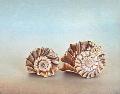 Photograph - Seashell Patterns by David and Carol Kelly