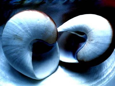 Seashell Rest Art Print by Colette V Hera  Guggenheim