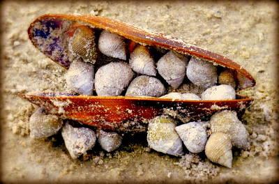 Beige Glass Photograph - Seashell Reunion by Karen Wiles