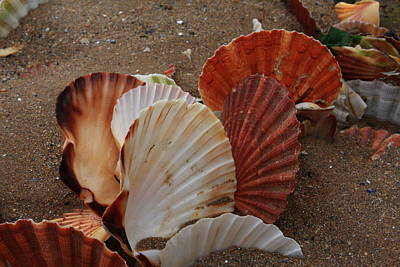 Photograph - Seashell Sail by Aidan Moran