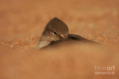 Photograph - Seashell Solitude by John F Tsumas