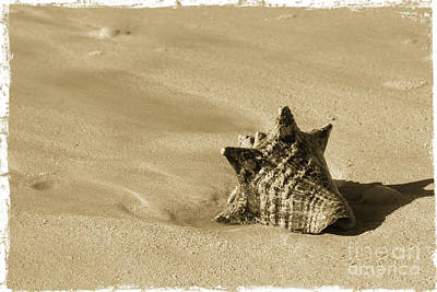 Seashell Art Print by Sophie Vigneault