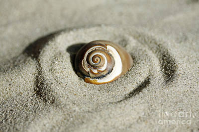Photograph - Seashell Swirl by Denise Pohl