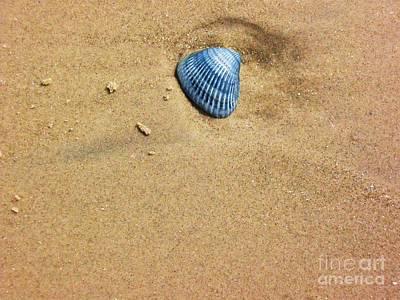 Seashell Art Print by Venus