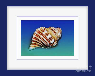 Photograph - Seashell Wall Art 1 - Blue Frame by Kaye Menner