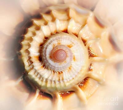 Photograph - Seashell Wall Art 11 - Spiral Of Harpa Ventricosa by Kaye Menner