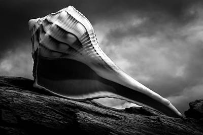 Photograph - Seashell Without The Sea 3 by Bob Orsillo