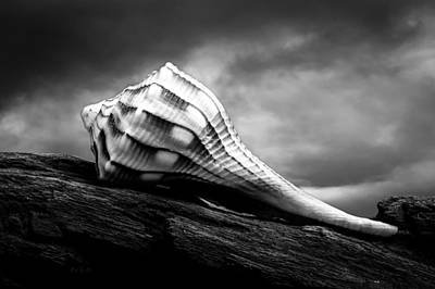 Still-life Photograph - Seashell Without The Sea by Bob Orsillo