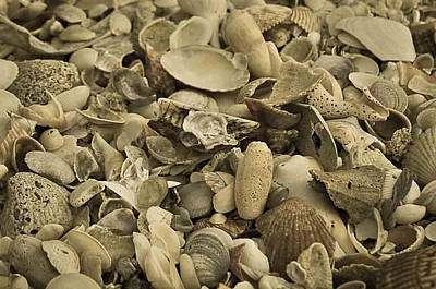 Natural Finish Photograph - Seashells #5 With Aged Finish by Maria Suhr