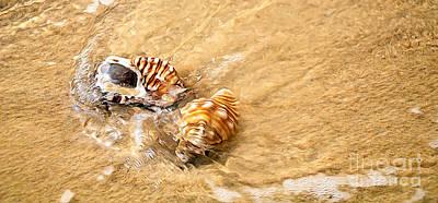 Photograph - Seashells And Ripples by Kaye Menner