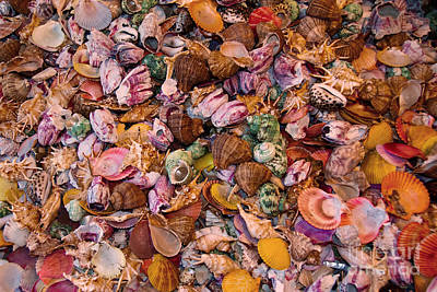 Photograph - Seashells by Anthony Sacco