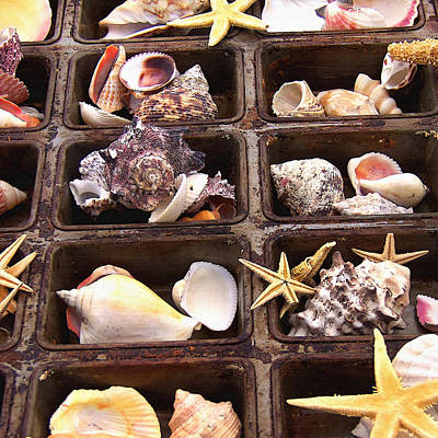 Treasure Box Photograph - Seashells by Art Block Collections