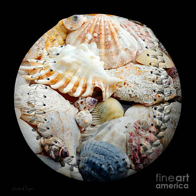 Digital Art - Seashells Baseball Square by Andee Design