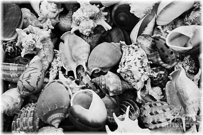 Seashells - Black And White Art Print by Carol Groenen