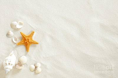 Seashells Art Print by Boon Mee