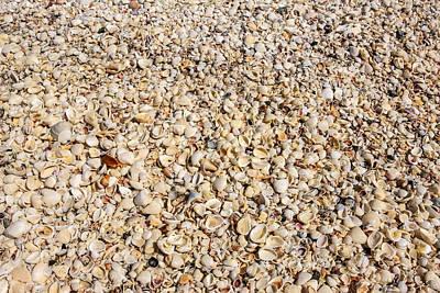 Grace Kelly - Seashells by Chris Smith