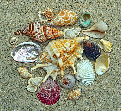 Seashells Collection Art Print