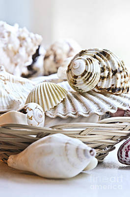 Several Photograph - Seashells by Elena Elisseeva