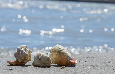 Photograph - Seashells by Garvin Hunter