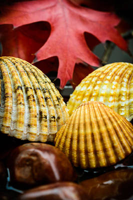 Red Leaves Photograph - Seashells II by Marco Oliveira