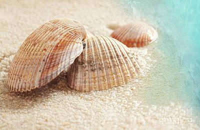 Seashells In The Wet Sand Art Print by Sandra Cunningham