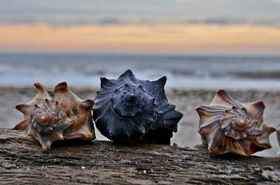 Jeka World Photograph - Seashells by Jeff Rose