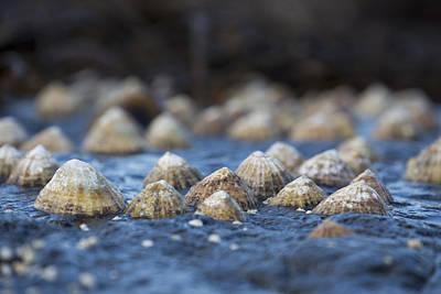 English Rock Groups Photograph - Seashells On A Rock  South Shields by John Short