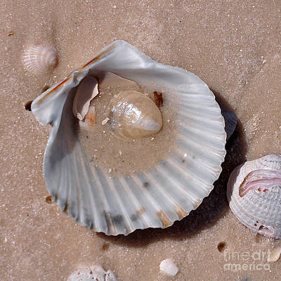 Photograph - Seashells On The Beach by Susan Cliett