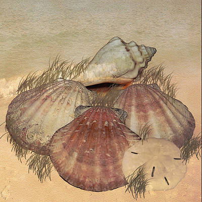 Digital Art - Seashells On The Beach by TnBackroadsPhotos