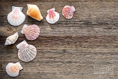 Seashells On Wood Art Print by Olivier Le Queinec