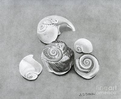 Marine Life Drawing - Seashells by Sarah Batalka
