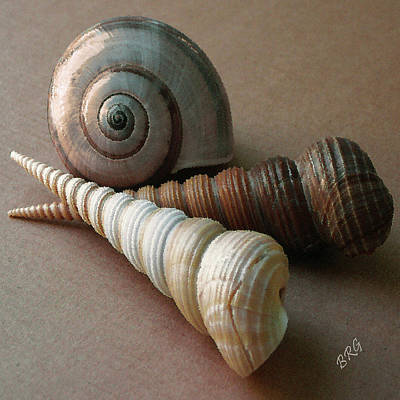 Photograph - Seashells Spectacular No 29  by Ben and Raisa Gertsberg
