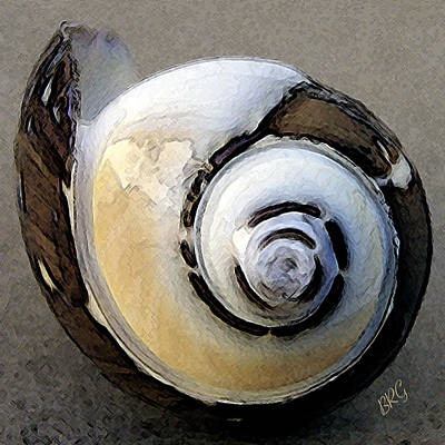 Digital Photograph - Seashells Spectacular No 3 by Ben and Raisa Gertsberg