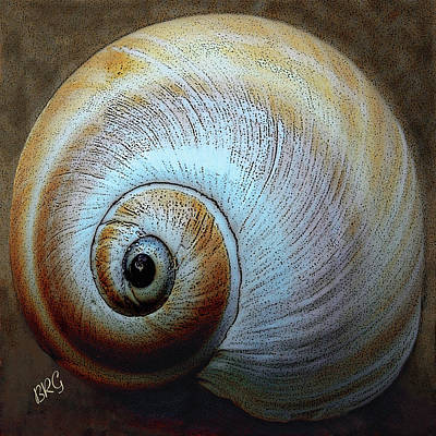 Spirals Photograph - Seashells Spectacular No 36 by Ben and Raisa Gertsberg
