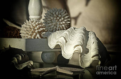 Photograph - Seashells Still Life by Charline Xia