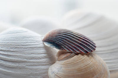 Photograph - Seashells by Terry DeLuco