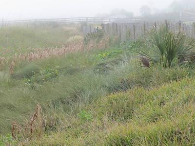Photograph - Seaside Dune Grasses II by Ellen Meakin