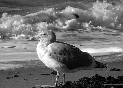 Photograph - Seaside Seagull Sees Surf by Brian Chase