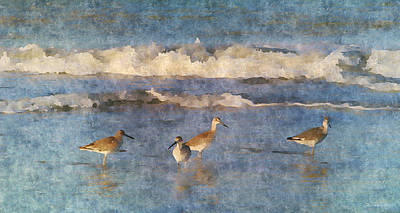Sandpiper Mixed Media - Seaside Search by David Kuhn