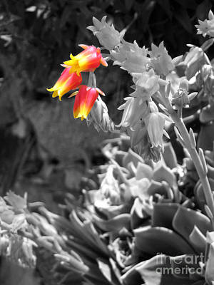 Photograph - Seaside Succulent by Amber Nissen
