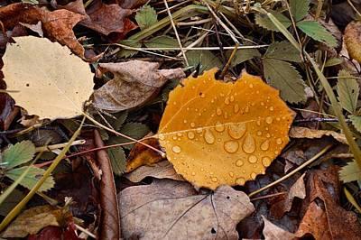 Photograph - Season Changing by JAMART Photography