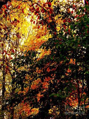 Photograph - Season Of Color by John Potts