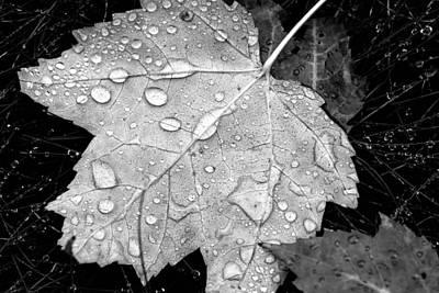 Fallen Leaf On Water Photograph - Seasonal Contrast by Karol Livote
